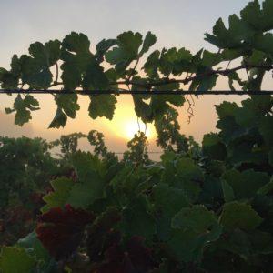 Les vignes de la Commanderie de Preïssan, vins de cépages